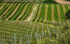 ca-fiui-valipolicella-corte-sant-alda-wine-adelaide-review-4