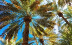 date-palms-greenspace-adelaide-review