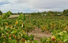 rasa-wines-barossa-rose-adelaide-review-3