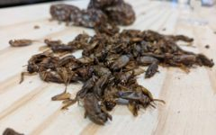 bug-life-edible-insects-university-adelaide-review-3