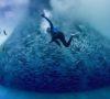 blue-cinema-adelaide-review
