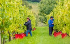 pwc-cultivating-next-crop-winemakers-adelaide-review
