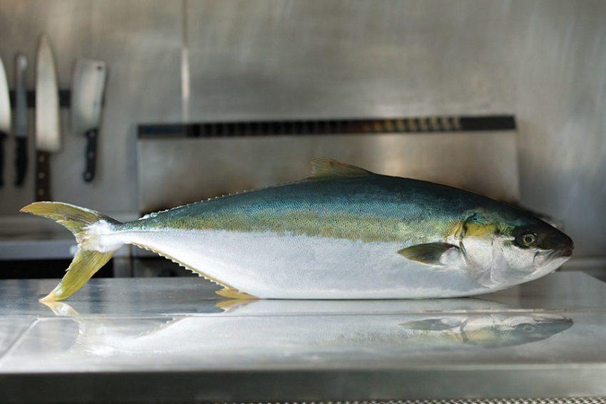 Hiramasa Kingfish: SA's aquaculture monarch