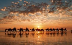 A camel trek in Western Australia (Photo: Shutterstock)
