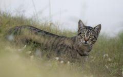 Feral cat (Photo: Kristian Bell / Shutterstock)