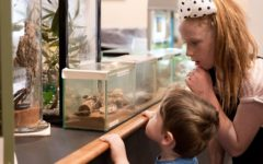 The South Australian Museum held its first dinosaurs-themed Autism-friendly family morning last year (Photo: Sia Duff)