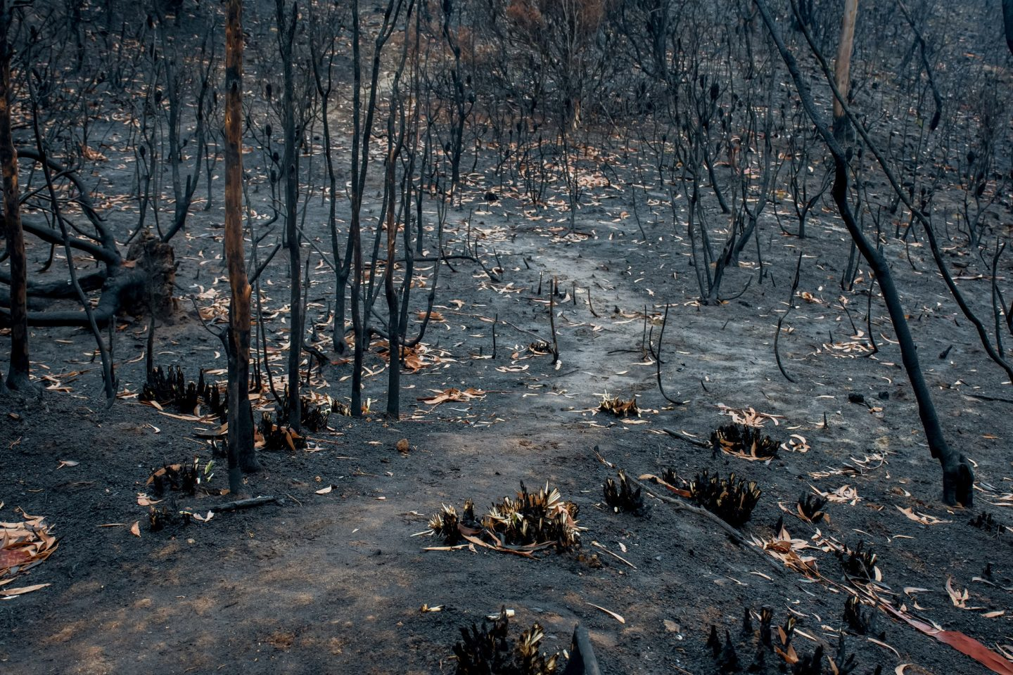 Bushfire aftermath in Blue Mountains